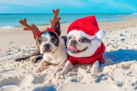 Dogs Dressed Up for Christmas on the Beach | Teplis Travel
